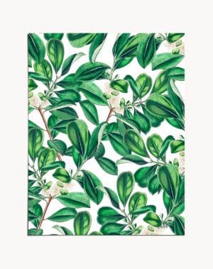 Shop Green Botanical, Vintage Plants Nature Illustration, Bohemian Art Print by artist Uma Gokhale 83 Oranges unique artist-designed wall art & home décor